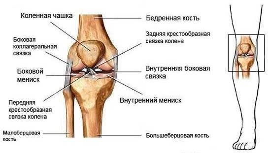 Разрыв связок коленного сустава диагноз мазь для суставов акулий хрящ